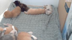 Live-Cat-Content