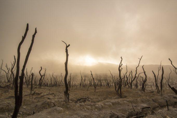 Deutschland alleine wird das Klima nicht retten!